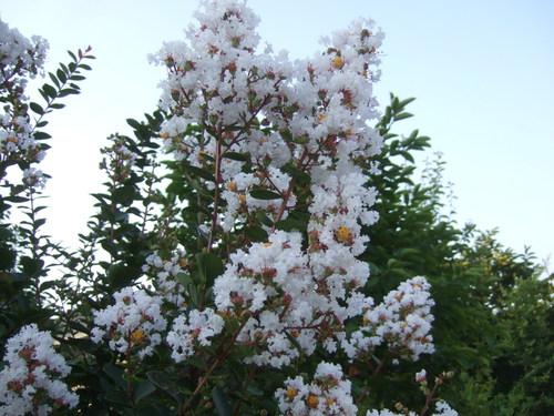 サルすべりの花は....赤、白、ピンク!_b0137932_22354828.jpg