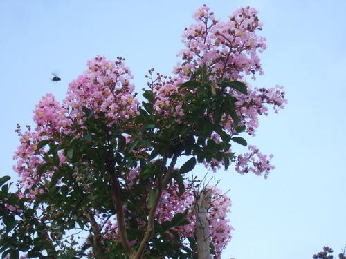 サルすべりの花は....赤、白、ピンク!_b0137932_2236153.jpg