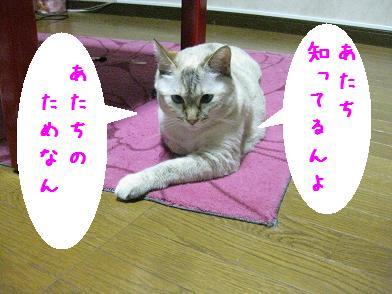 b0151748_12305796.jpg