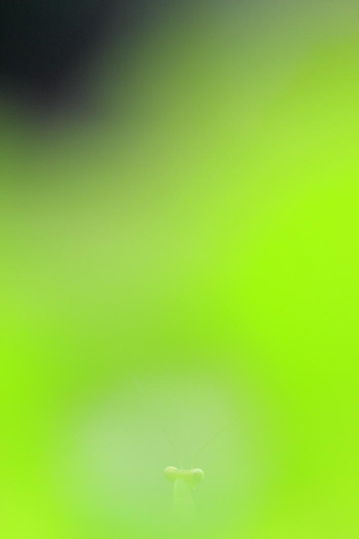 d0148060_18274430.jpg