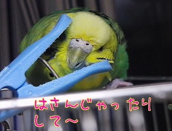 f0196665_0231826.jpg