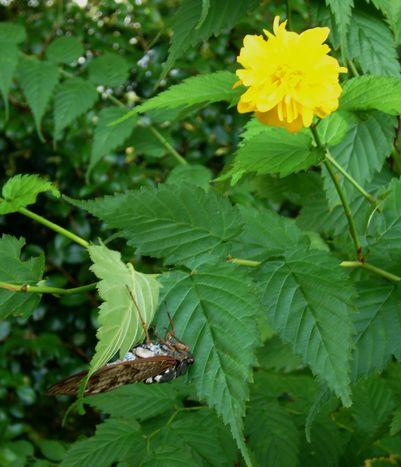 路傍の花、樹々の鳥 (8) ~西行蝉~_b0102572_1710316.jpg