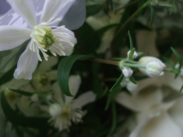 オークリーフ(カラー・クリスタルブラッシュの花束)_f0049672_13434842.jpg