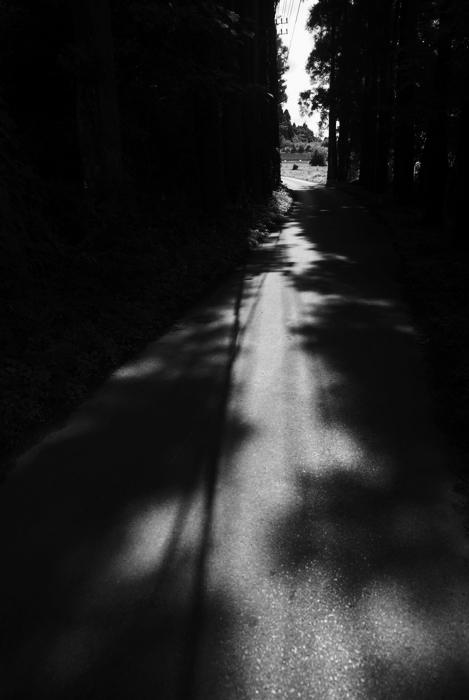 夏の道_c0127403_2250374.jpg