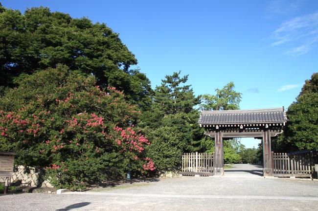 京都御苑 寺町御門の百日紅_e0048413_17264624.jpg