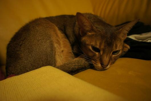 猫画像_f0128542_1031492.jpg