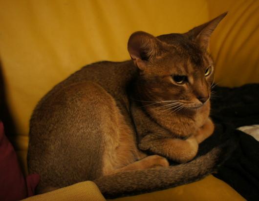 猫画像_f0128542_9575398.jpg