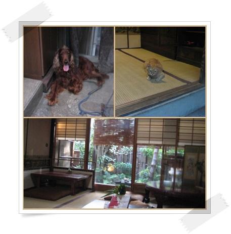 柴母の会 真夏の京都を楽しむ_c0049950_16191022.jpg