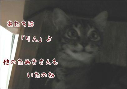 d0139352_2314225.jpg
