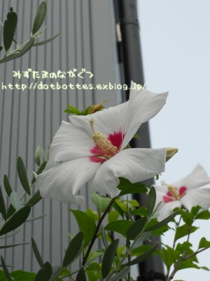 d0170109_22152071.jpg