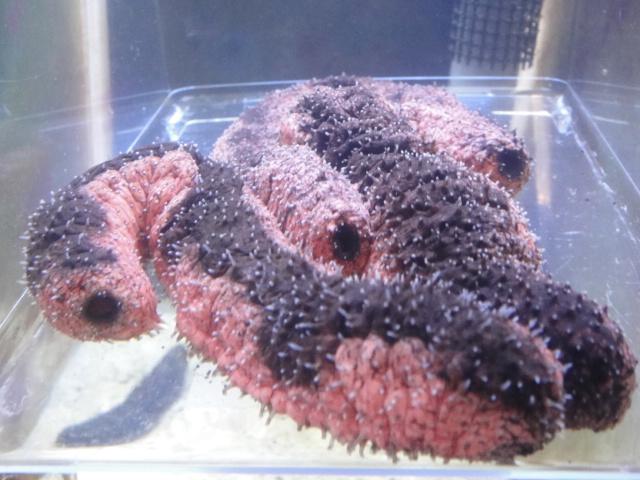 熱帯魚・海水魚・サンゴ・金魚・水草_f0189122_13293747.jpg