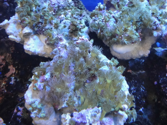 熱帯魚・海水魚・サンゴ・金魚・水草_f0189122_1330466.jpg