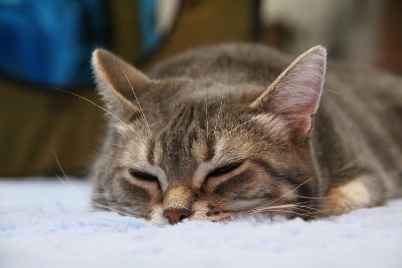 対談企画第2弾・第2回目「猫カフェの子たちを撮る極意って?」_d0167436_5255671.jpg