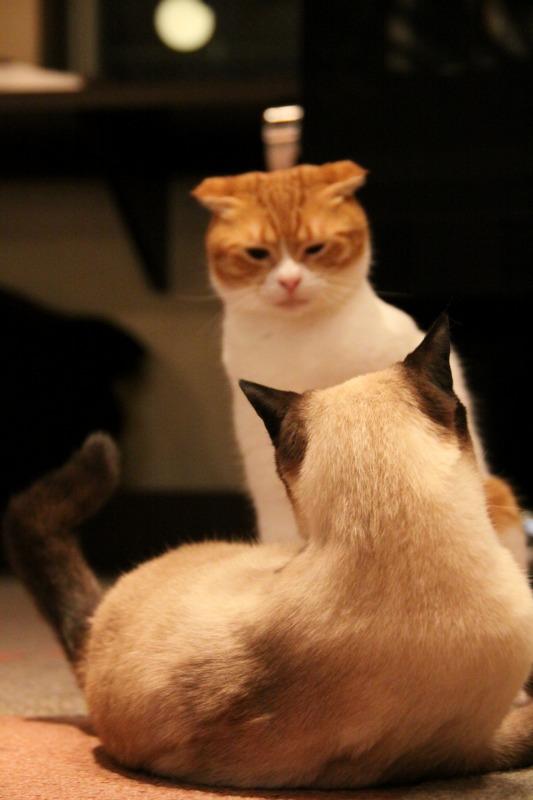 対談企画第2弾・第2回目「猫カフェの子たちを撮る極意って?」_d0167436_5302596.jpg