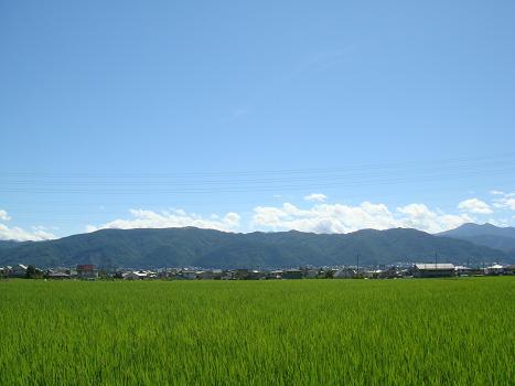 暑い夏の朝_a0014840_2232076.jpg