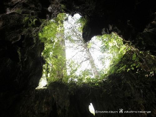 屋久島 縄文杉 (2)_f0233665_1426523.jpg