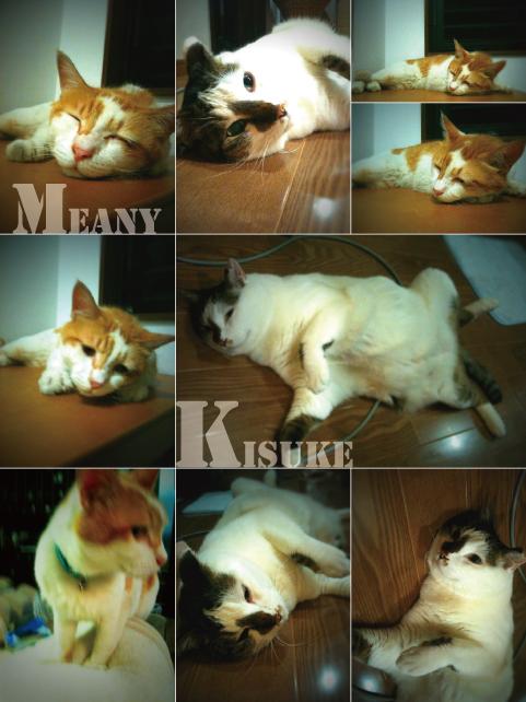 夏☆猫_e0158970_14343100.jpg