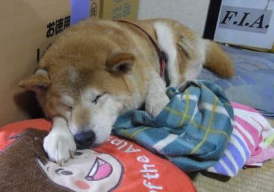 犬猫の引き取りに関してのご理解とご協力のお願い_b0038381_234351.jpg