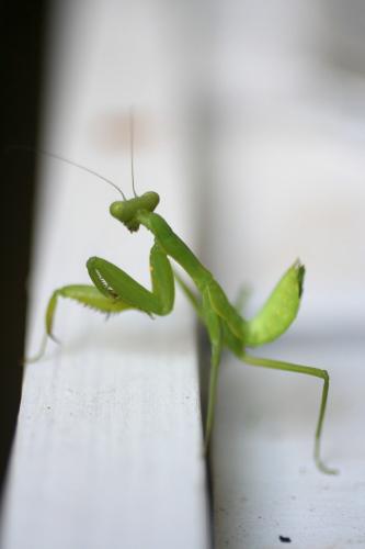 ◆庭の虫たち_e0154682_2319938.jpg