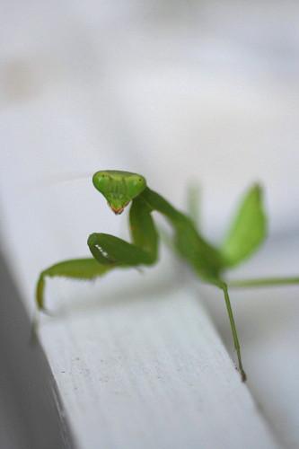 ◆庭の虫たち_e0154682_23275788.jpg