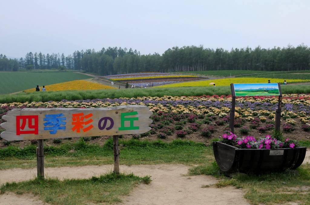 北海道の旅6 「富良野を行く」_a0148206_13302845.jpg