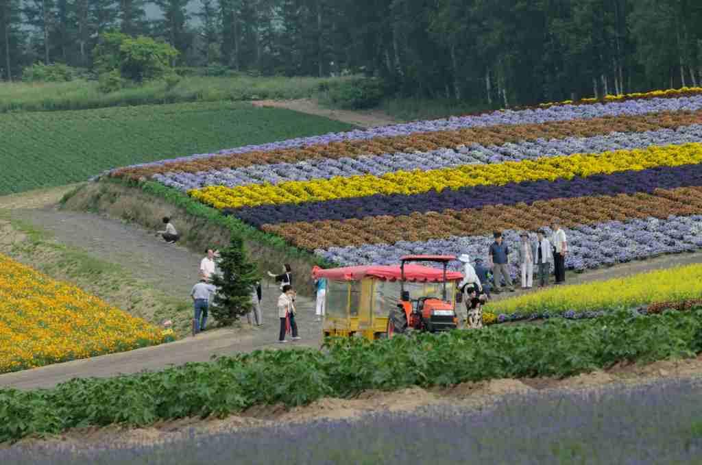 北海道の旅6 「富良野を行く」_a0148206_13333944.jpg