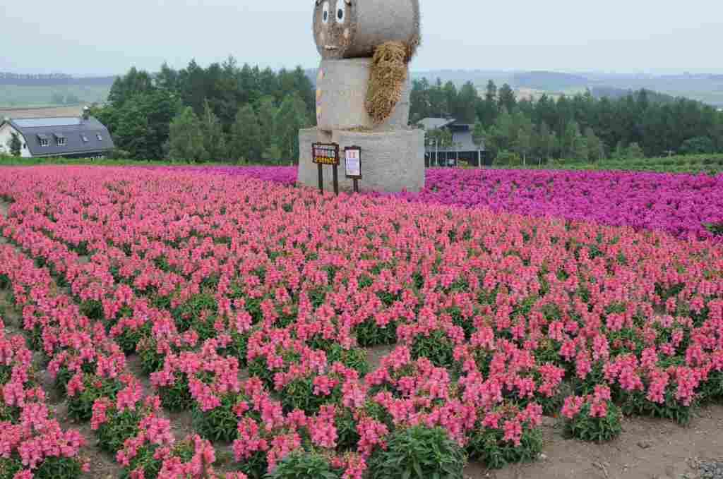北海道の旅6 「富良野を行く」_a0148206_13335430.jpg