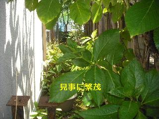 f0031037_18241756.jpg