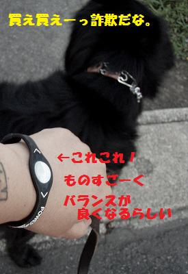 d0128364_8381251.jpg