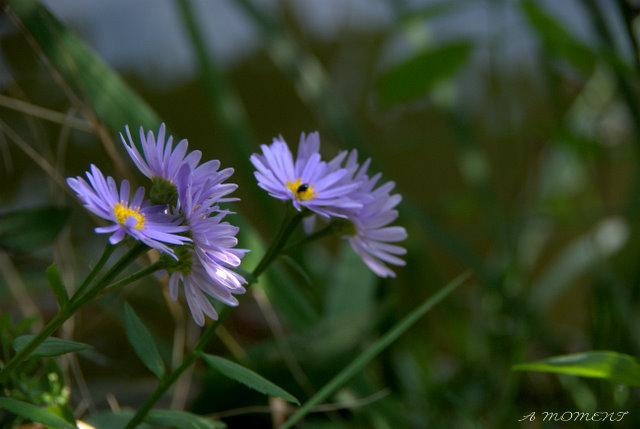 涼やかに紫染まる_f0147895_9329100.jpg