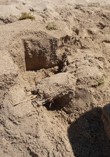 ユキちゃん作「砂の」カステッロ・デル・モンテ_f0106597_6203683.jpg