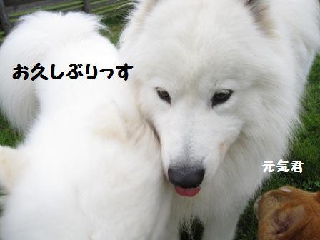 f0212597_11515477.jpg