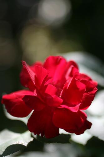 ◆暑さに強い花は_e0154682_0412338.jpg
