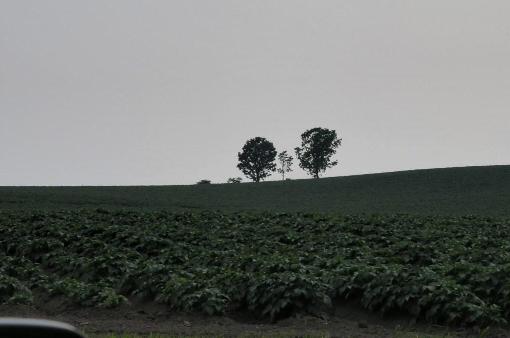北海道の旅7 「美瑛の丘を行く」_a0148206_9164852.jpg