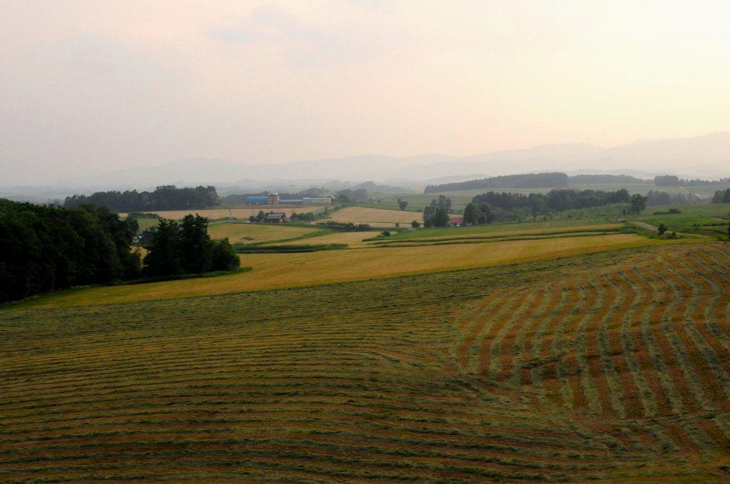 北海道の旅7 「美瑛の丘を行く」_a0148206_916982.jpg
