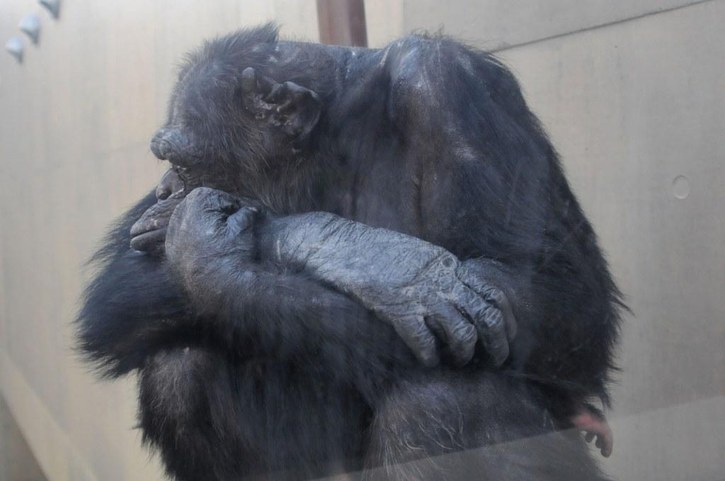北海道の旅9(完) 「旭山動物園で遊ぶ」_a0148206_9462124.jpg