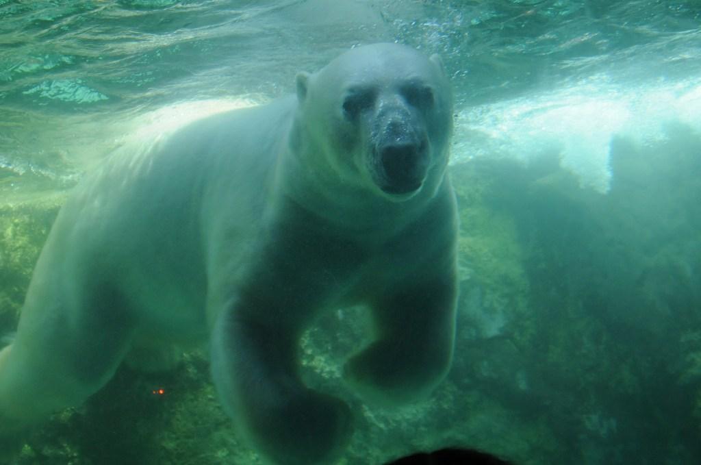 北海道の旅9(完) 「旭山動物園で遊ぶ」_a0148206_947475.jpg