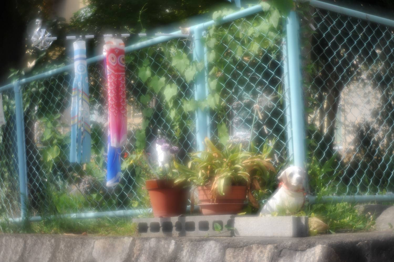 清原VK70Rで南桜塚へ_b0069128_11322339.jpg