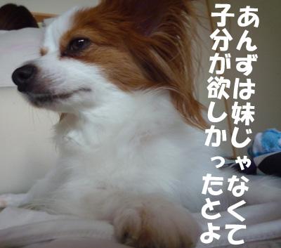 b0170863_1626783.jpg
