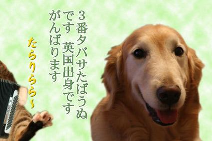 e0072606_20101552.jpg