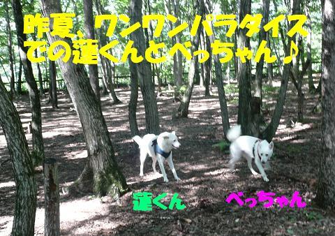 f0121712_10423292.jpg