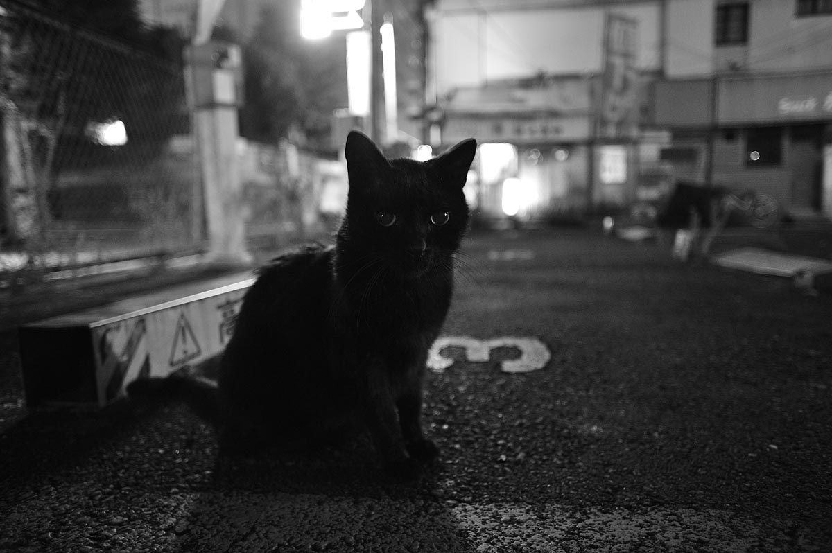 Sleepless Downtown ~ Stray Cat~_a0059621_223328.jpg