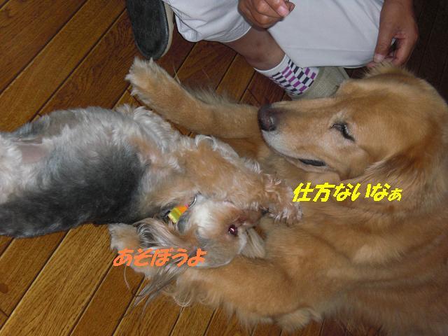 f0114128_16123266.jpg