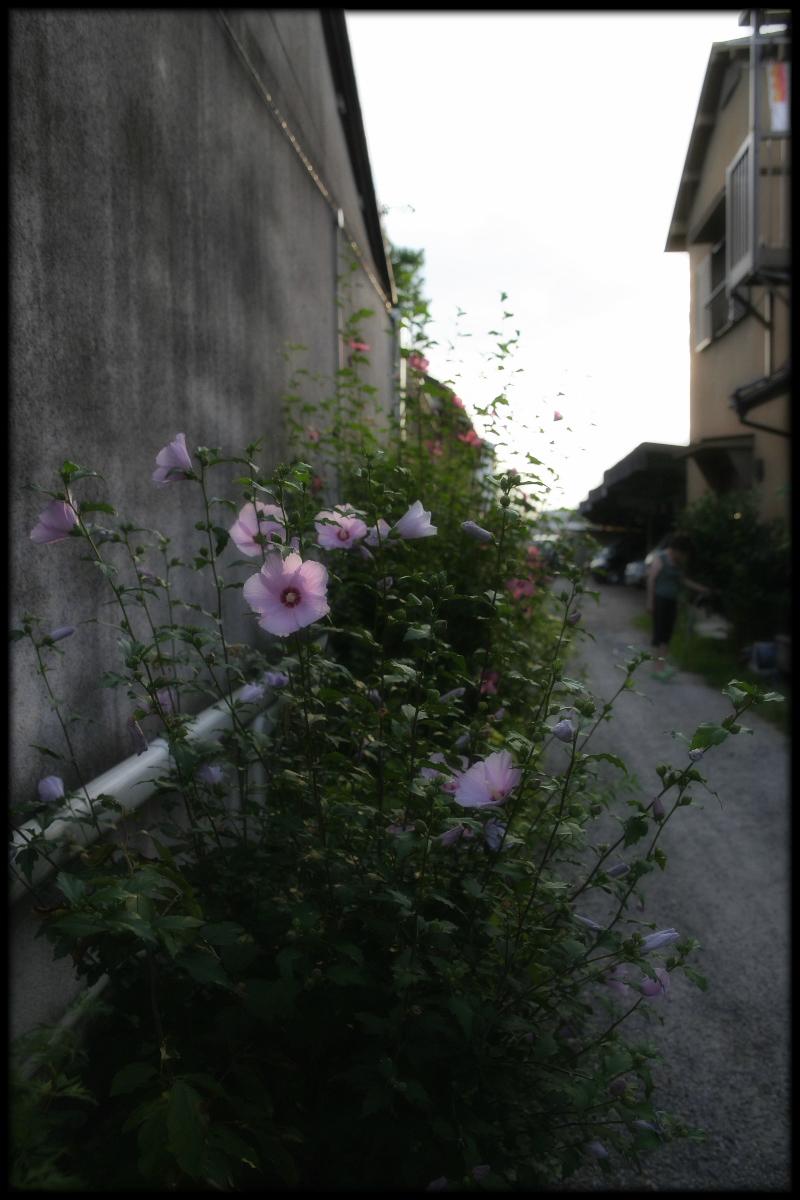 奈良町スナップ_f0021869_23441891.jpg