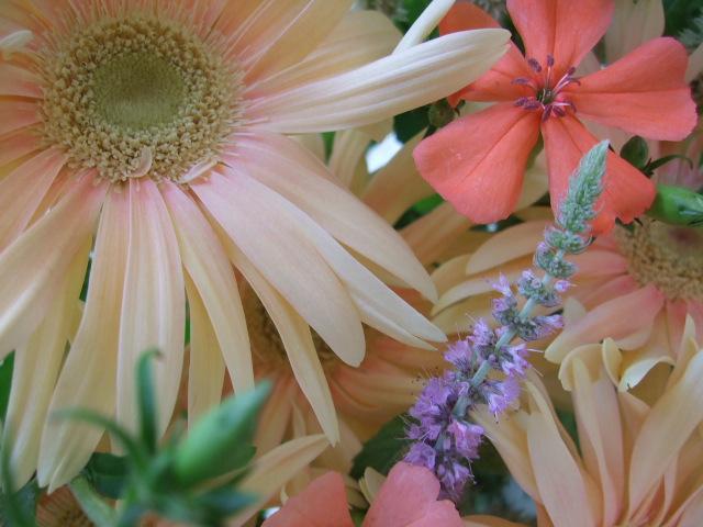 オークリーフ(夏のピンクカラーブーケ)_f0049672_13174820.jpg