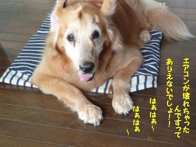 f0118135_12575758.jpg