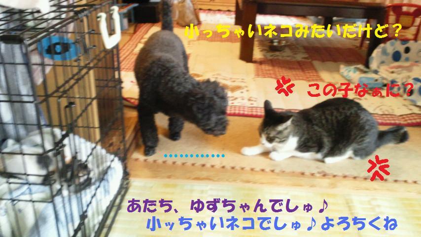 f0236744_1192977.jpg