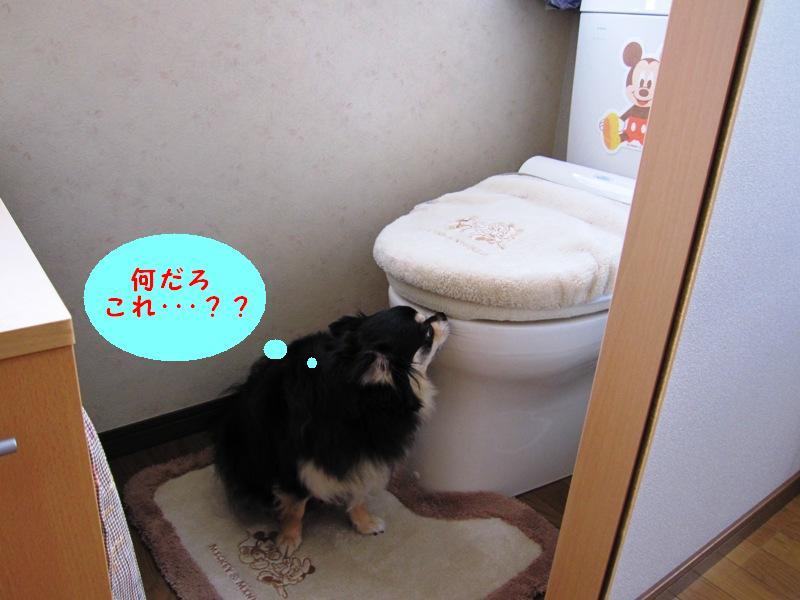 b0150088_2005215.jpg