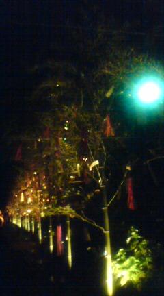 竹と灯のアート♪_f0028791_011898.jpg