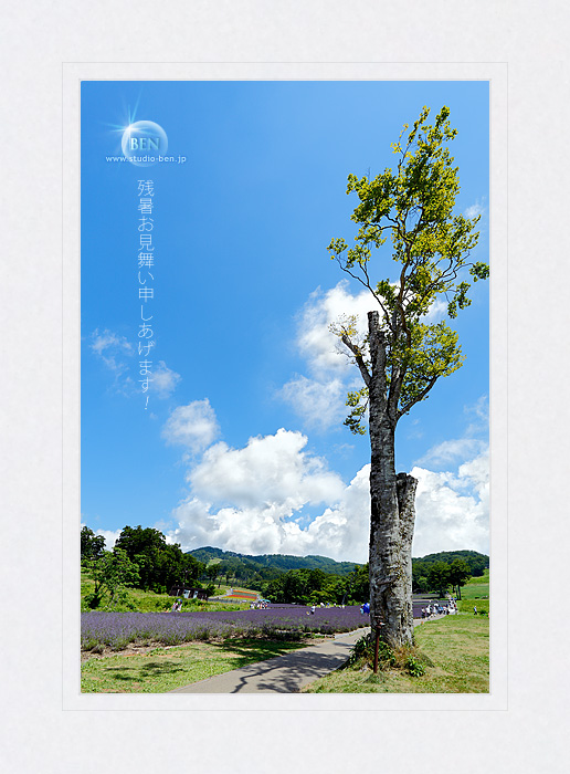 これ、ブナの樹でざんしょ..._c0210599_2125993.jpg